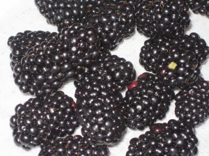 DDblackberries